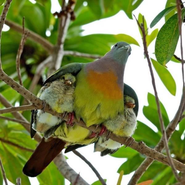 Beautiful green bird